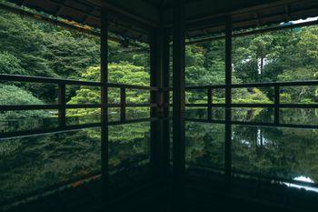 新緑の庭の写真