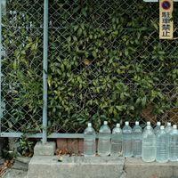 フェンス前に並んだ水の入った猫除けペットボトルの写真