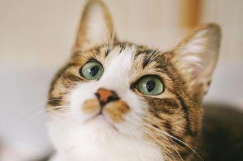 上を見上げる猫の写真