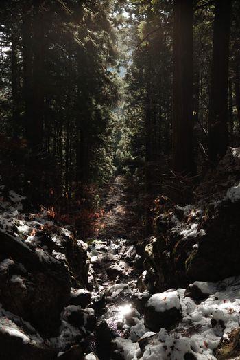 渓谷に光がさすの写真
