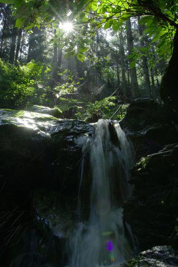 朝日が眩しい新緑と渓流の写真