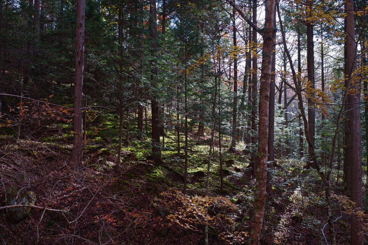森の中に差し込む光の写真