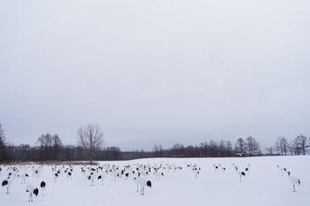 阿寒国際ツルセンターの様子の写真