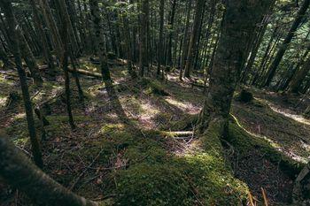 地面に伸びる白樺の木々の影の写真