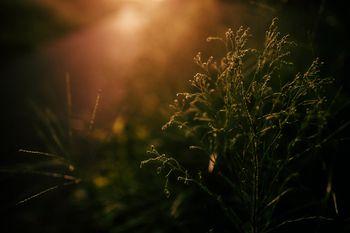 西日に浮かび上がる草木の姿の写真