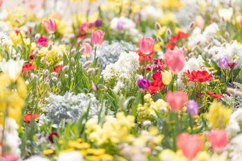 春爛漫の花壇の写真