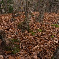 朽ち葉で覆われる地面の写真