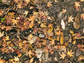 落ち葉の中に混じる紅葉(テクスチャ)の写真