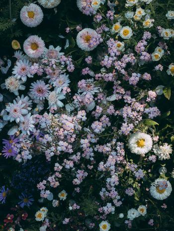 小さい花が咲く花壇の写真