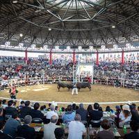 超満員の闘牛場(徳之島なくさみ館)の写真