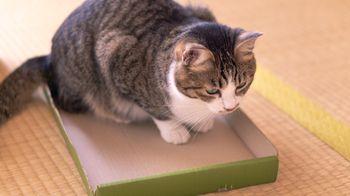 収納されたかった猫の写真