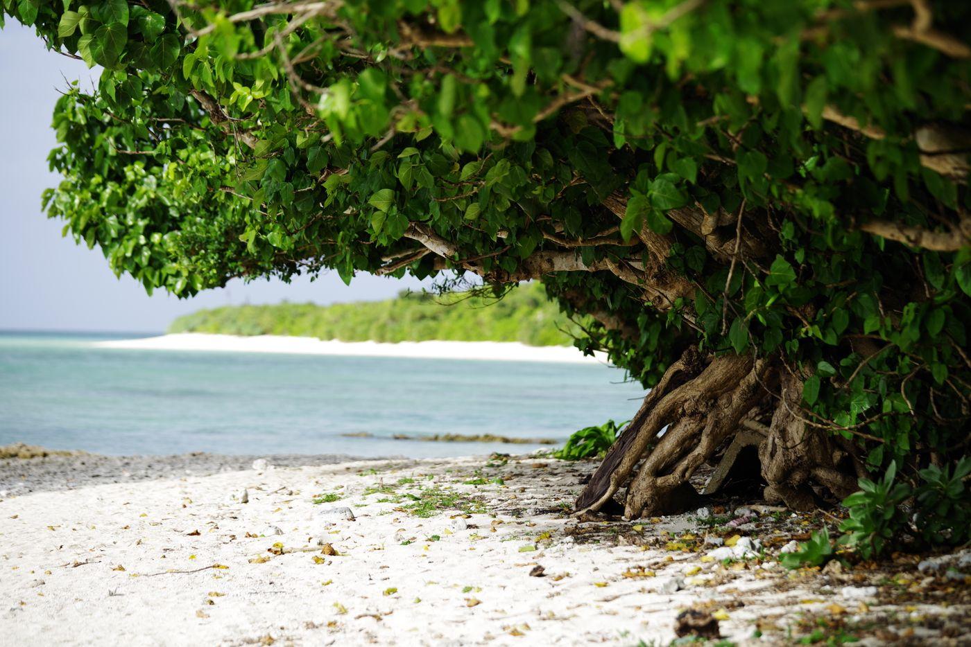 南国の白い砂浜とガジュマルの木の写真